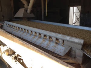 soybean cleaning