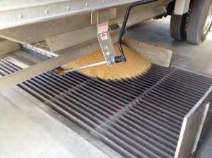 soybean dumping