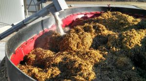 cow chow