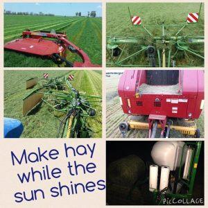 make hay