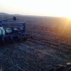 morning planting
